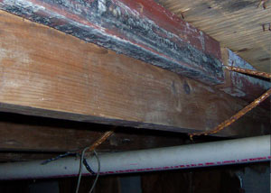 wood rot from mold damage